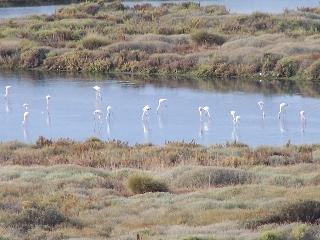 Flamingoes from the terrace - how cool!