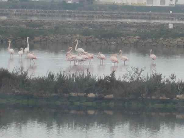 Flamingo birds on the Salt lakes behind the Villa