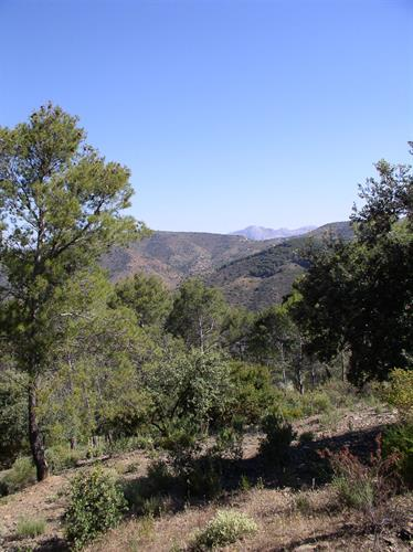 a 20 minute drive and you are in the Montes de Malaga park
